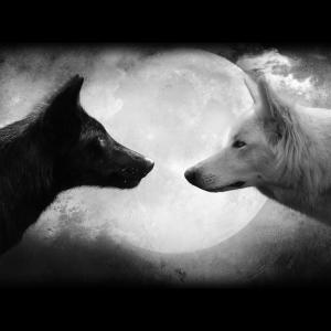 wolfchallenge